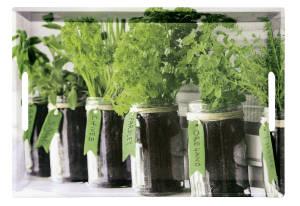 Kesper Serviertablett Herbs 48 x 30 x 3,5 cm